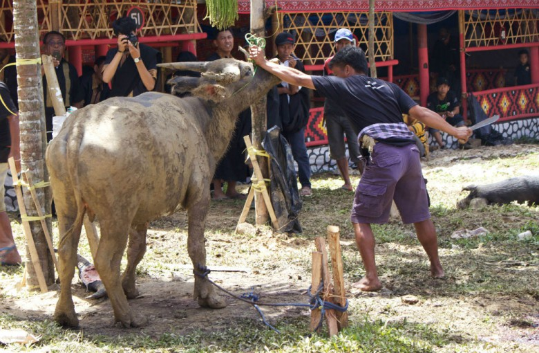 Opferung eines Büffels